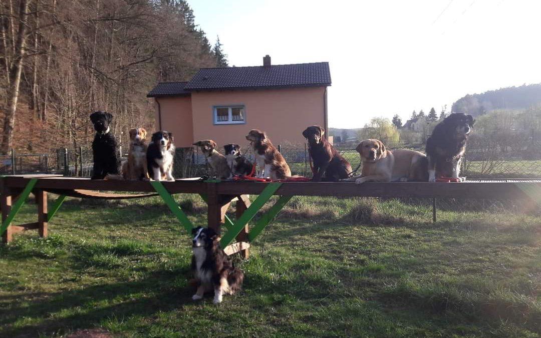 Seenland mit dem Hund – Hundeschule Seenland