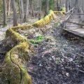 Die steinerne Rinne bei Ettenstatt