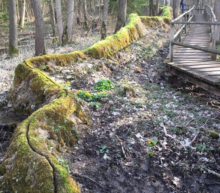 Steinerne Rinne: Wachsende Steine in Rohrbach