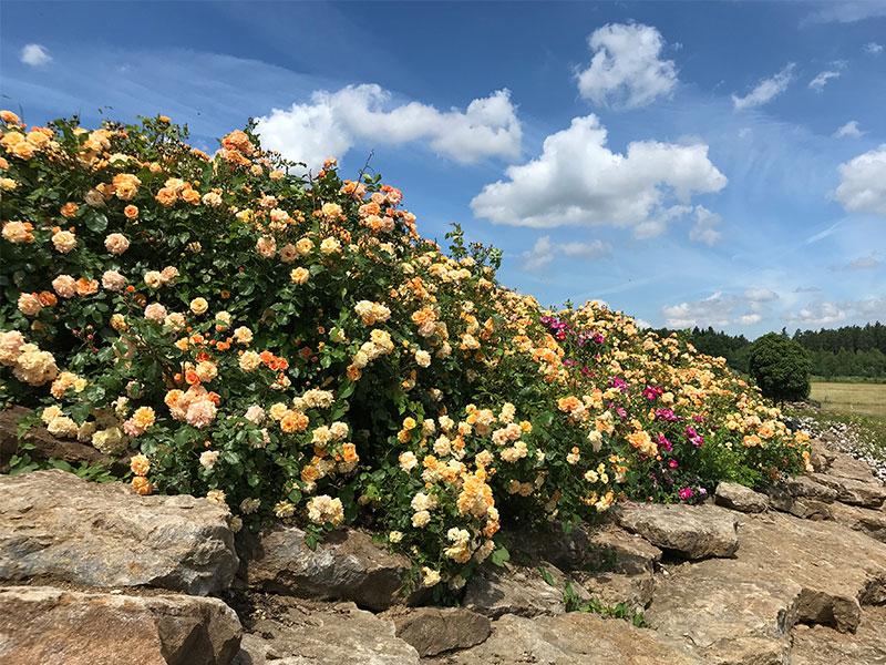 rosenhuegel